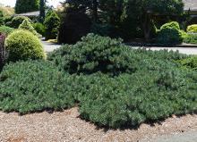 plant habit, older