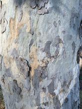 bark (S. Ruettgers)