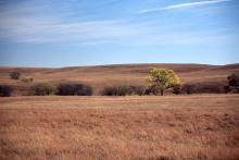 in a prairie habitat, fall