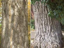 trunk,bark