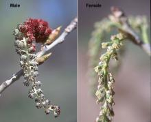 flower clusters, spring