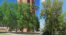 plant habit, in landscapes