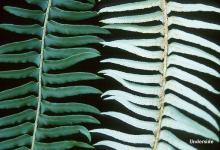 section of fronds