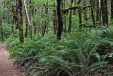 in a woods, Oregon's Willamette Valley