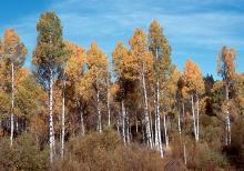 in habitat, fall