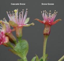 after petal drop, comparison