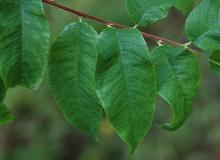 leaves, in deep shade