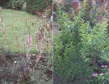 plant habit, spring and summer