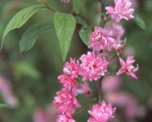 flowering branch, late spring