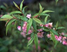 leaves and flowers, late spring