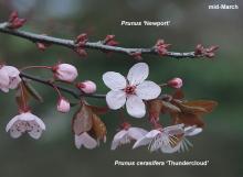 twig comparison, spring