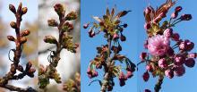 flower emergence, spring
