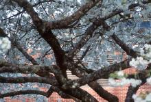 large hortizontal branches