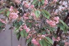 branches at petal fall