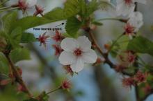 end of flowering