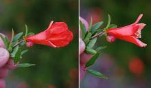 flower, before and after petal fall