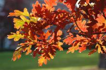 leafy branch, fall