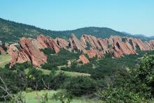 in habitat, Rocky Mountain foothills