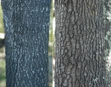 older trunks, bark