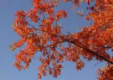 branches, fall