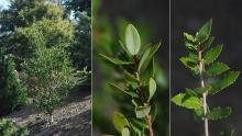 small shrub and leafy shoots