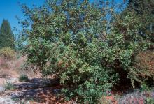 plant habit, in landscape