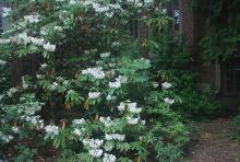 plant habit, flowering in August