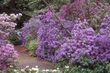 along a garden path, flowering