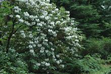 plant habit, flowering, July