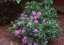 plant habit (small), flowering