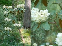 plant habit and flowers