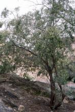 plant habit, in a desert habitat