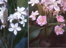 flowers, again