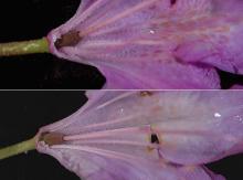 flowers, inside
