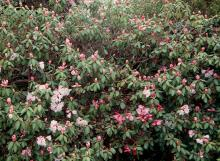 plant habit, start of flowering