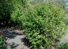 plant habit, exposed site