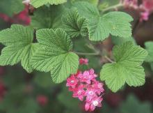 leaves and flowers