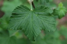 leaf, spring