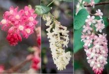 red, white and pink flower clusters