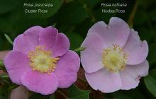 flowers, comparison