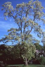 plant habit, flowering