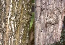 bark, trunk