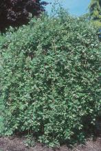 plant habit, summer