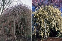 plant habit, winter and spring