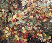fruit and leaves, fall