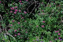 foliage and flower clusters