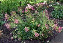plants habit, flowering