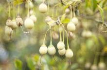 fruit, fall