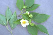 leaves and flower