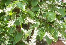 branches, flowering